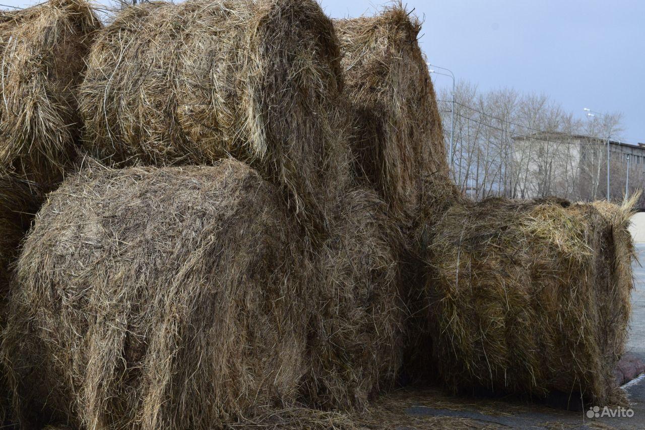 руси бобовое сено фото продукты заказ
