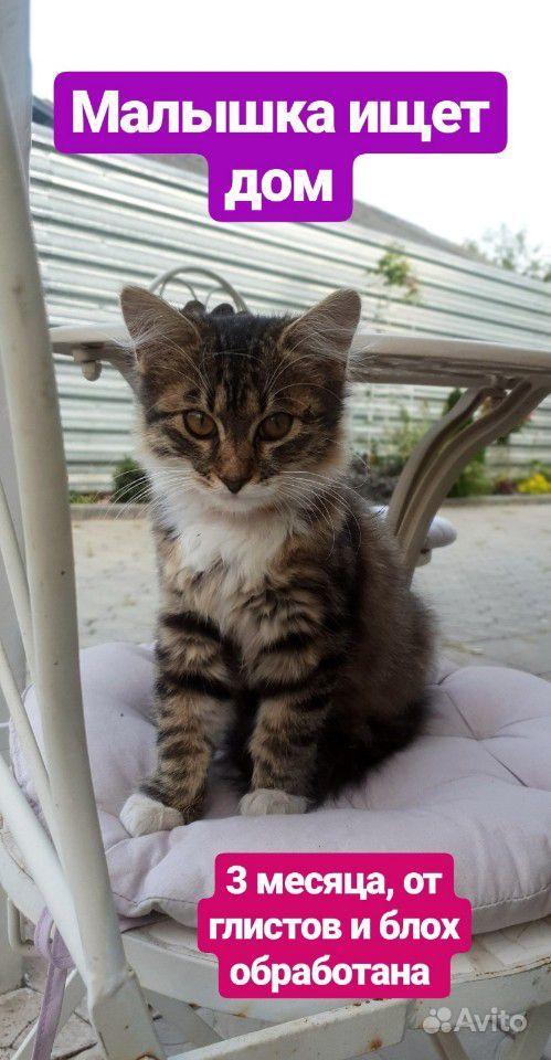 Отдам в добрые руки котенка в Воронеже - фотография № 1