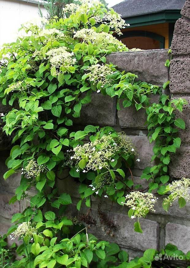 Растения купить на Зозу.ру - фотография № 9
