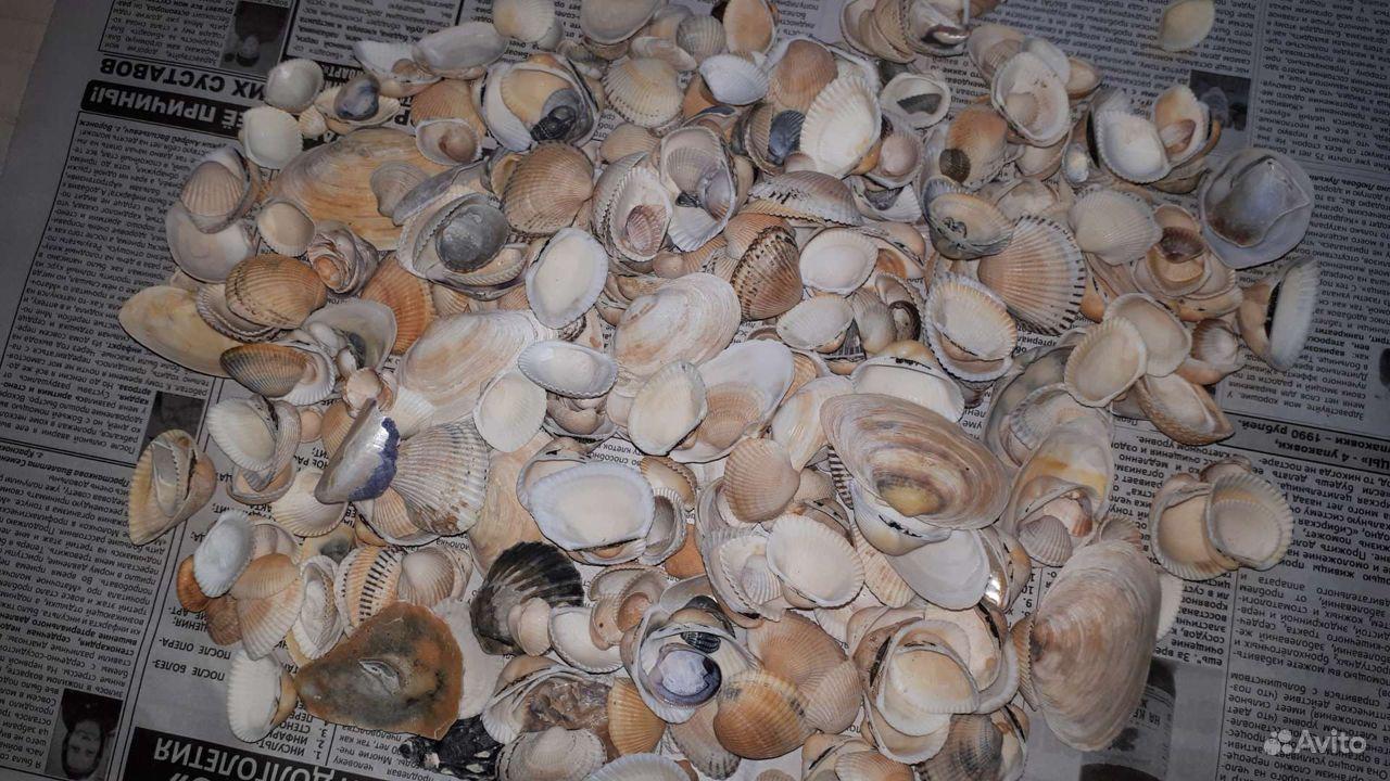 Морские ракушки купить на Зозу.ру - фотография № 2