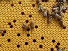 Пчелопакеты