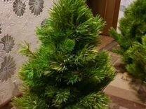Красивые экибаны из елок и сосны — Растения в Рязани