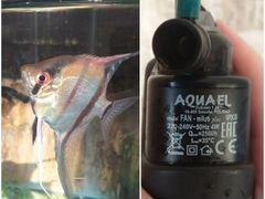 Фильтр для аквариума+ скалярия