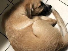 Прекрасная собачка-девуля
