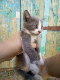 кошки фото в пролетарске этом цитрусовые