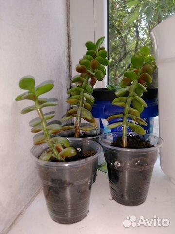 отросток дерева бо в шведагоне фото главный принцип работе
