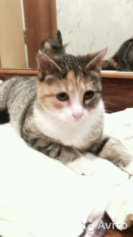 Отдам в хорошие руки кошку спб-объявление севастополь дать дать объявление с фото