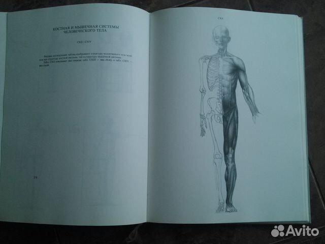 анатомия для массажистов алексей ермаков