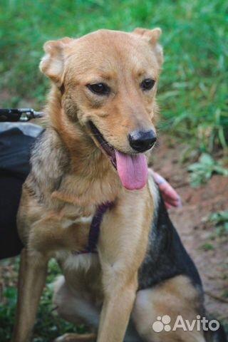 Собака ищет дом купить на Зозу.ру - фотография № 3