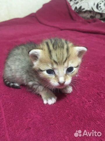 Котёнок тигренок