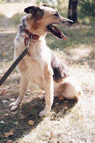Молодая и добрая собака в дар купить на Зозу.ру - фотография № 4