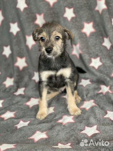 Ксолоитцкуинтли (пух ) мексиканская голая собака купить на Зозу.ру - фотография № 7