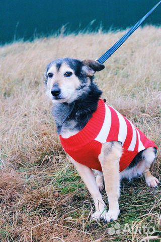 Собака ниже колена в дар купить на Зозу.ру - фотография № 9