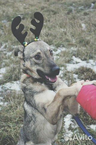 Собака Смайлик в дар купить на Зозу.ру - фотография № 1