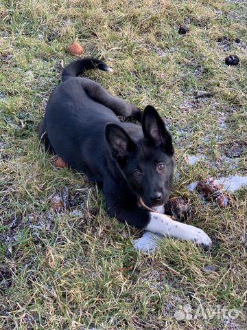 Собака девочка купить на Зозу.ру - фотография № 1