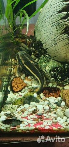 Рыбки аквариумные 89118444414 купить 4