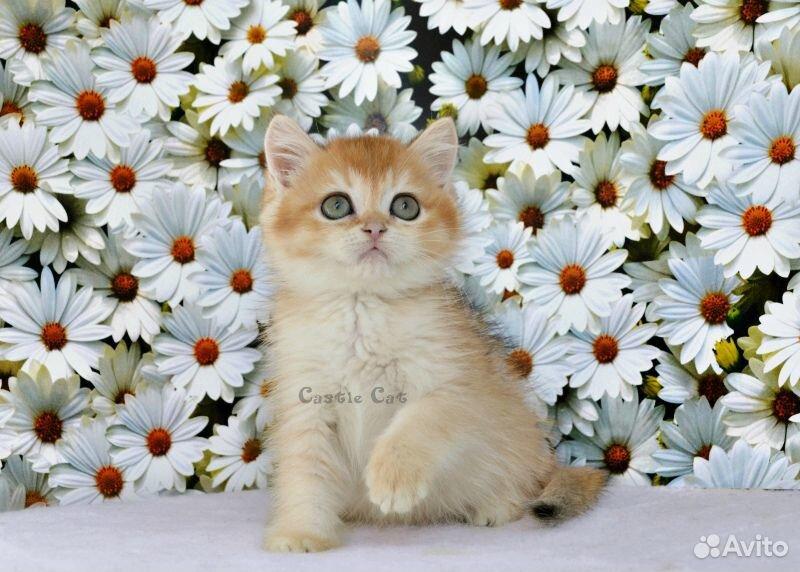Очаровательный котик