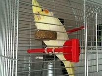 Попугай Корелла+клетка большая 60-30-40
