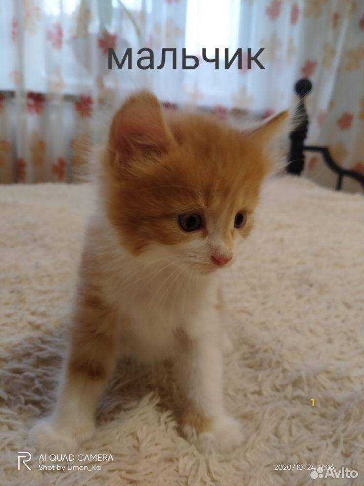 Отдам миленьких котят  89039946144 купить 3