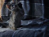 Маленькая кошечка приносящая удачу
