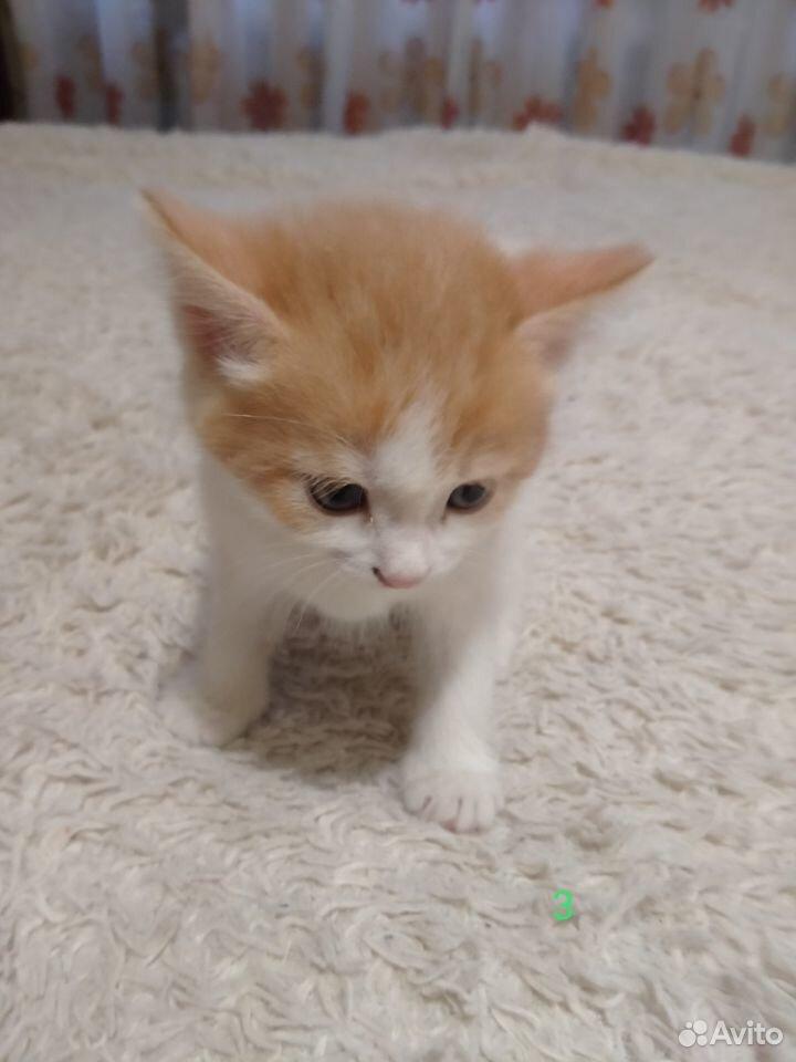 Отдам миленьких котят  89039946144 купить 8