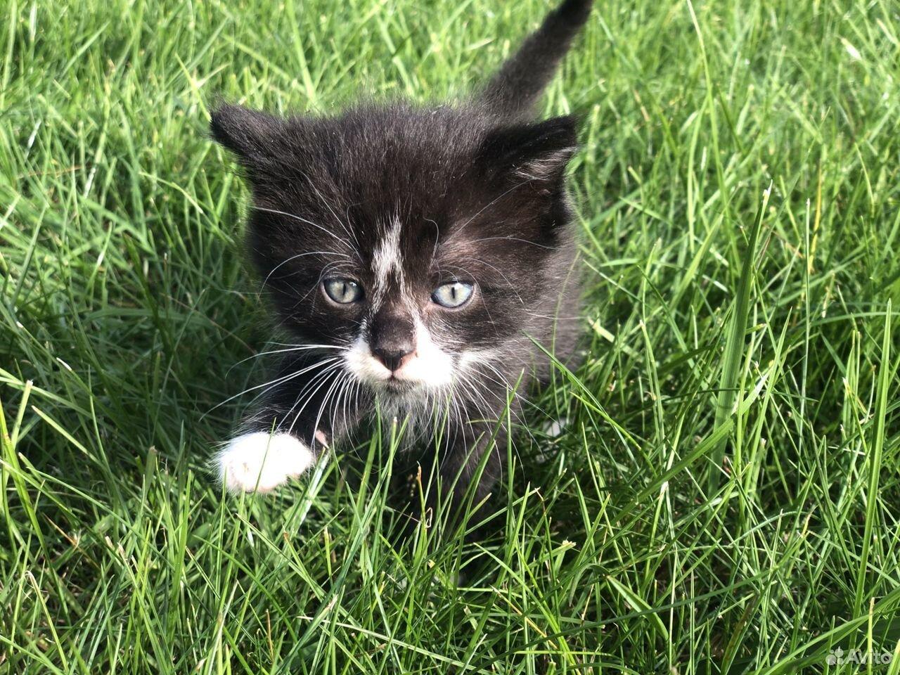 Котята в добрые руки бесплатно  89118513410 купить 2