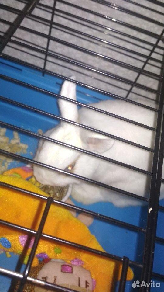 Кролик  89991156657 купить 4