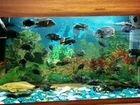 Аквариумые рыбки