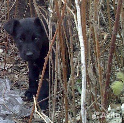 Красивые щенки ищут любящие семьи  89135639765 купить 8