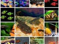 Аквариумные рыбки, огромный выбор