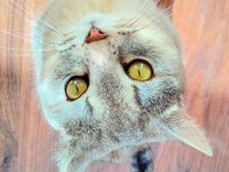 Животные (кот)