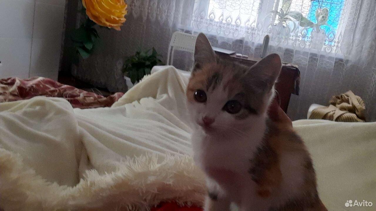 Кошка  89192829522 купить 2