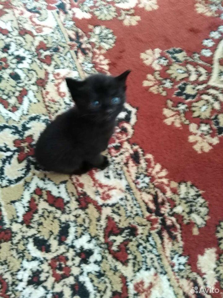 Котята даром  89841611281 купить 2