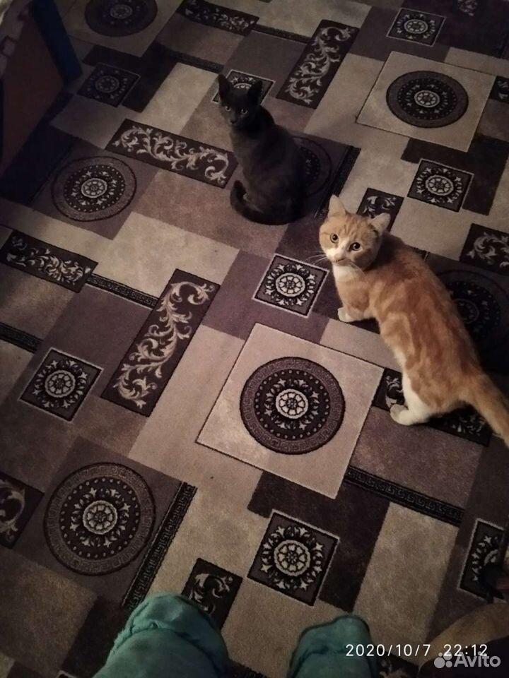 Коты- крысоловы