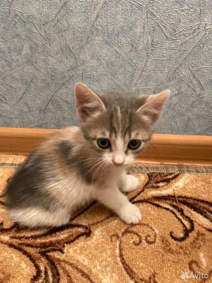 Отдадим котят в добрые руки  89050613439 купить 2