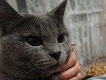 Подарю красивого кота