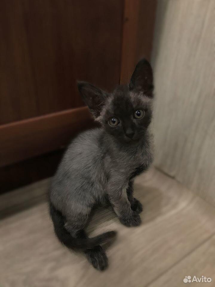 Verkaufe Kätzchen  89621612953 kaufen 3