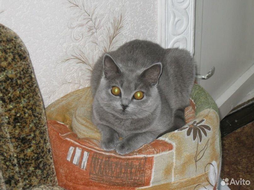 Кошка в добрые руки  89510739055 купить 2