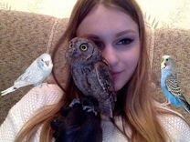 Продам волнистого и суву — Птицы в Москве